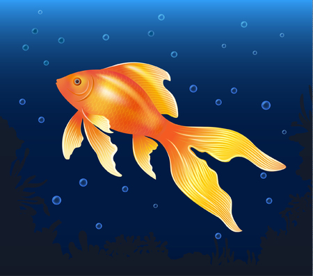 goldfish vector illustration Illustration