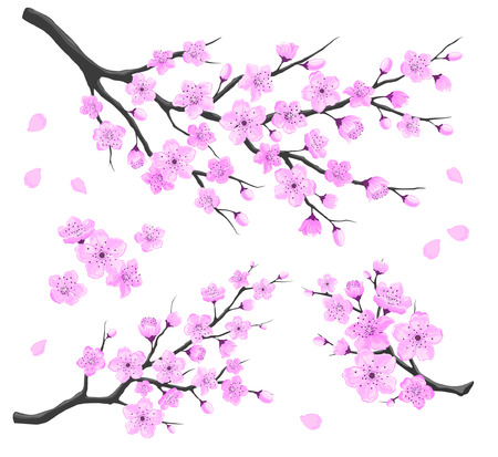 temlate: Cherry Blossom Branches Set. Detailed Vector Illustration. Sakura Branches on White Background.