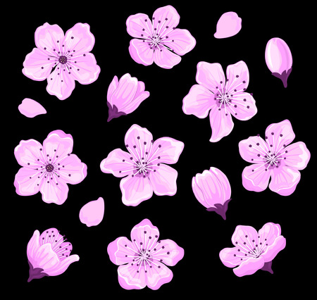 temlate: Cherry Blossom Flowers Set for Your Design. Sakura Flowers Set