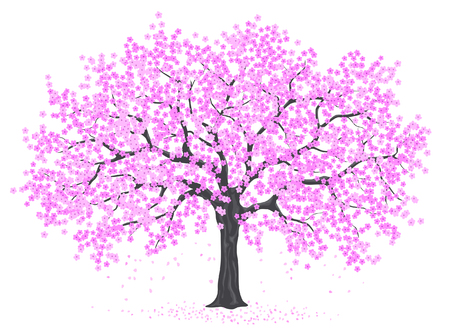 temlate: Cherry Blossom Tree Vector Illustration on White Background