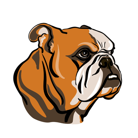 Portrait of English bulldog. Vector Illustration