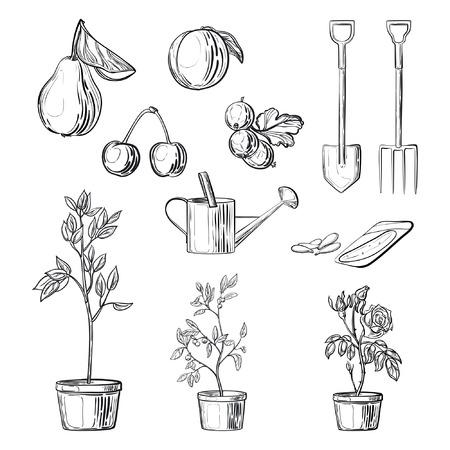 labranza: Conjunto de artículos de jardinería. bocetos a mano alzada vector aislados sobre fondo blanco. Frutas, arbustos en macetas, semillas, equipos de jardinería. Elementos para el centro de jardinería, tiendas, mercado. Vectores