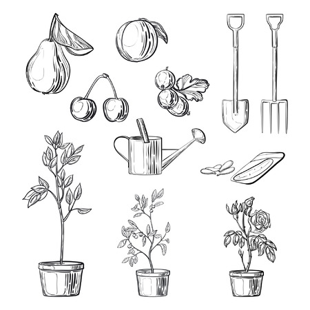 tillage: Set of gardening items. Freehand vector sketches isolated on white background. Fruits, bushes in pots, seeds, garden equipment. Elements for garden center, shops, market.