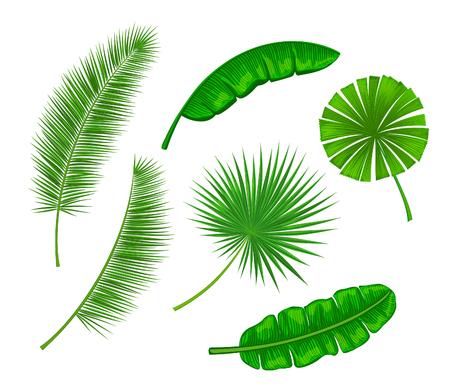 Ensemble de feuilles de palmier. Ventilateur, banane, feuilles de cocotier. Les feuilles sont incluses comme pinceaux dans la bibliothèque de brosse