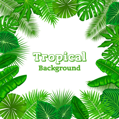 bird of paradise: Tropical Background with Exotic Tropical Leaves. Fan, Coconut, Banana Palms, Monstera, Aralia, Bird of Paradise, Fern, Alocasia Leaves