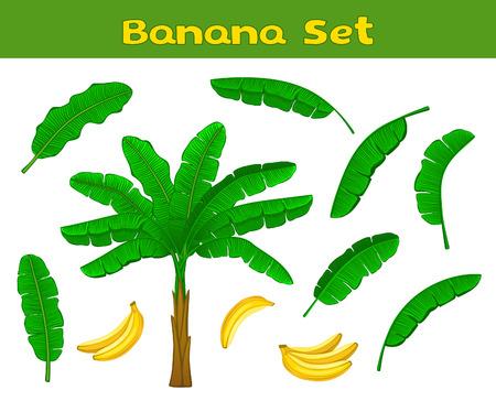 feuille arbre: Banana Set avec Palm, fruits de banane et de feuilles de bananier. Les feuilles et les bananes fruits sont inclus Pinceaux dans la bibliothèque de brosse Illustration