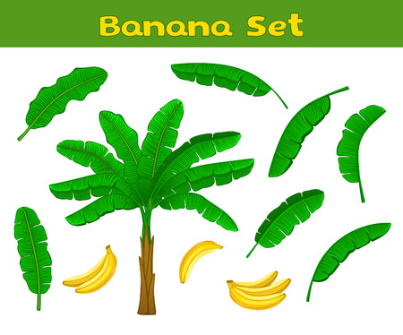 banana leaf: Banana Set with Palm, Banana fruits and Banana Leaves . Leaves and banana fruits  are included as  Brushes in brush library