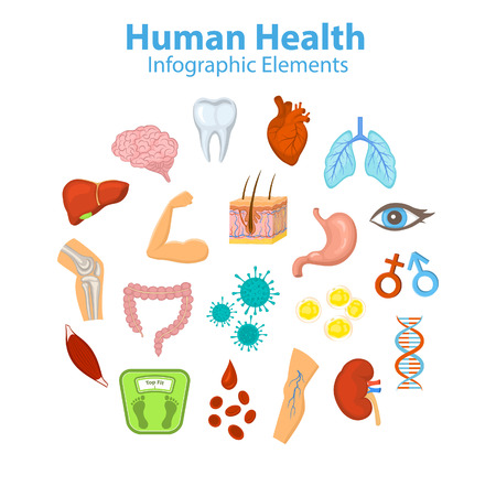Human Health Infographic Elements Objects. Heart, brain, liver, lungs, stomach, intestine, skin hair structure, red blood cells, fat and immune cells, body parts, bones, joints, muscle, eyesight, dna, weight control, kidney, man and woman symbols, varicos