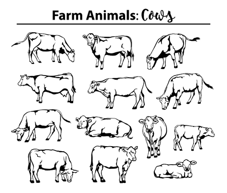 Different cows set in contour, outline. Side view, front view, laying, standing, grazing, walking etc Illustration