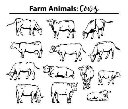 Verschillende koeien in contour, omtrek. Zijaanzicht, vooraanzicht, het leggen, status, het weiden, wandelen etc