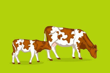 pied: Two red pied cattles. Big cow and cattle vector illustration Illustration