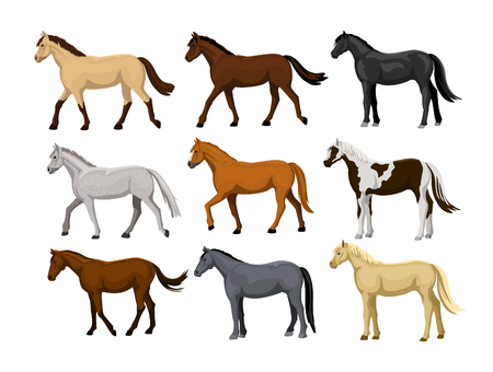 Different Horses Set in typical coat colors: black, chestnut, dapple grey, dun, bay , cream, buckskin, palomino , tobiano paint pattern Stock fotó - 66013682