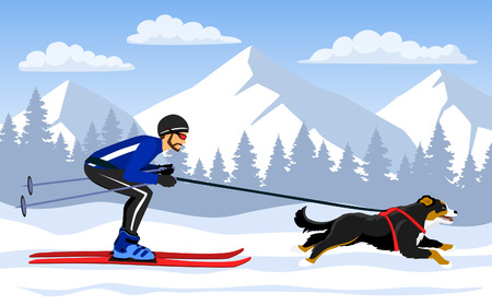 Man Skijoring with his dog bernese in mountains