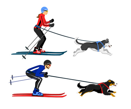bernese: Couple, Man and Woman skijoring with their dogs vector illustration. Outdoor winter activity Illustration