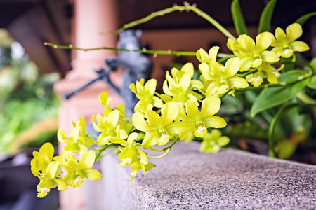 Orchid flower bloom with soft focus and blur background. Beatiful Thai orchid flowers with bluring musician statue on background. Stock Photo