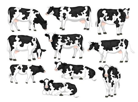 ustawić Holstein Fresian cattles czerni i bieli połatany płaszcz rasa. Krowy z przodu, widok z boku, spacery, leżący, patrząc, jedzenie, stojący Ilustracje wektorowe
