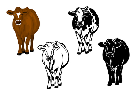 Front view cow in brown color, silhouette, contour and patched silhouette set Illustration