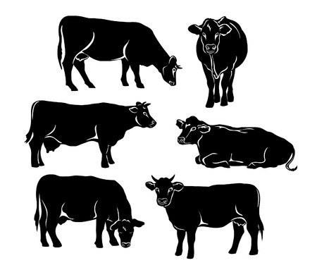 Cattle silhouette set in black color. Cows standing, lying, eating, grazing, side and front view