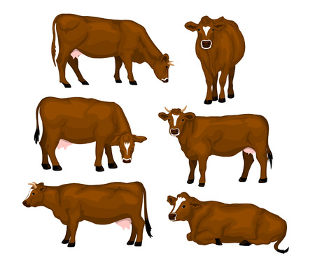 Brown cattle set. Cows standing, lying, eating, grazing, side and front view Illustration