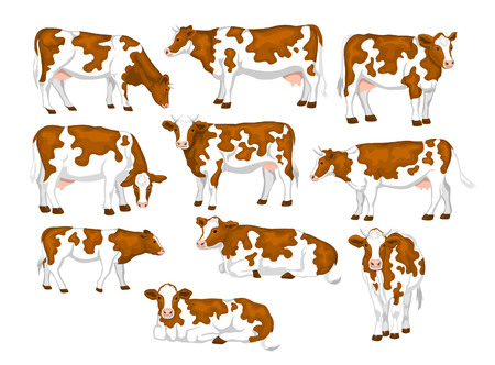 Ayrshire red and white patched coat breed cattles set. Cows front, side view, walking, lying, gazing, eating, standing