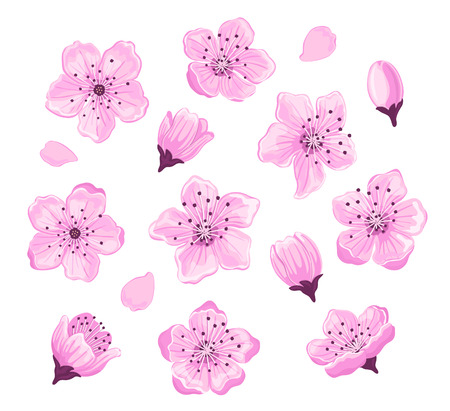 Cherry blossom spring flowers set Illustration