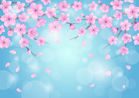 Seasons greeting background with cherry blossoms flowers branches on blue backdrop with bokeh