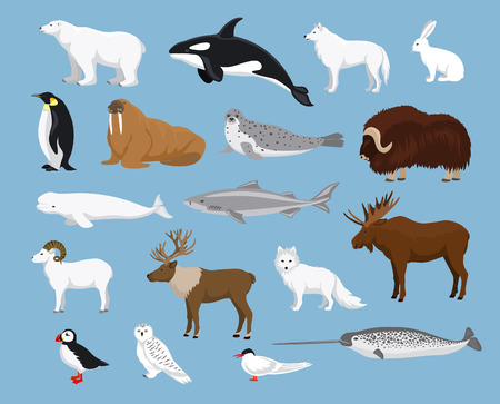 Arctic animals collection with reindeer, orca, narwhal, shark, musk ox, fox, wold, puffin, tern, moose, walrus, penguin, beluga whale, hare, polar bear, harp seal, dall sheep, snowy owl Иллюстрация