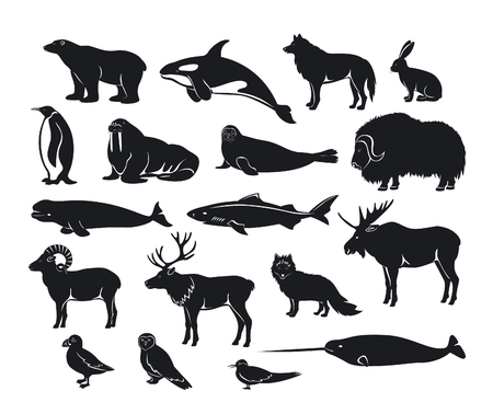 Arctic animals Silhouette collection with reindeer, orca, narwhal, shark, musk ox, fox, wold, puffin, tern, moose, walrus, penguin, beluga whale, hare, polar bear, harp seal, dall sheep, snowy owl Zdjęcie Seryjne - 74310887