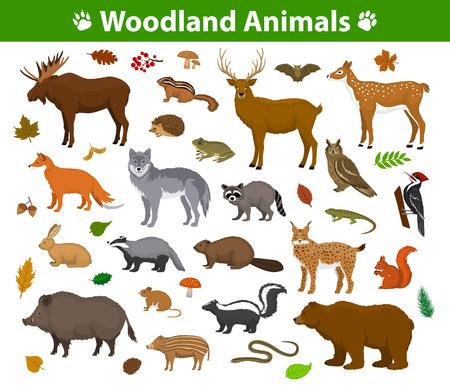 Colección de los animales del bosque del arbolado incluyendo ciervos, oso, búho, jabalí, lince, ardilla, pájaro carpintero, tejón, castor, skunk, erizo Ilustración de vector