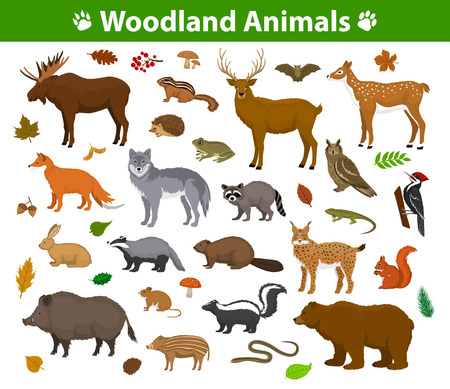 Woodland forest animals  collection including deer, bear, owl, wild boar, lynx, squirrel, woodpecker, badger, beaver, skunk, hedgehog 向量圖像