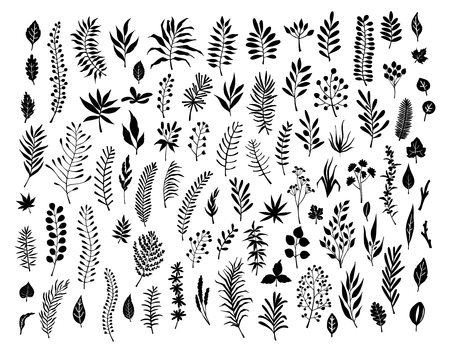 meadow wild herbs, floral twigs branches set collection