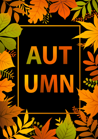 autumn background: colorful bright autumn fall leaves branches on black background poster