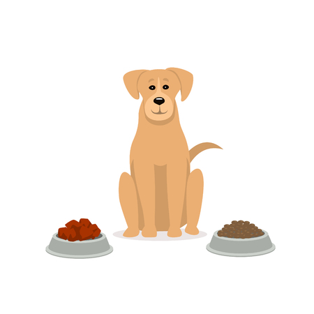 raw vs kibble  dog food  graphic Illustration