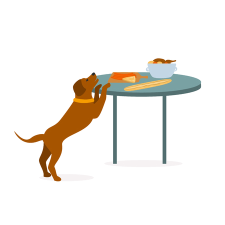 dog trying to steal human food graphic Foto de archivo - 114703476