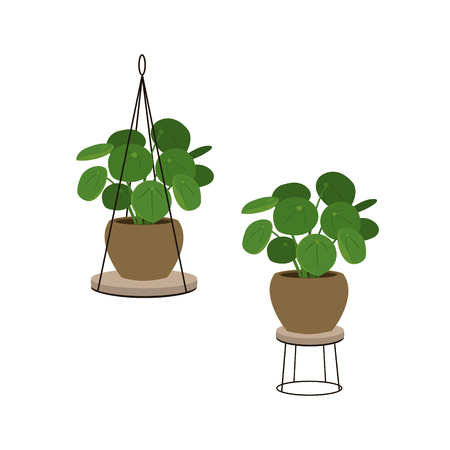 chinese money tree in a pot in decorative plant stands