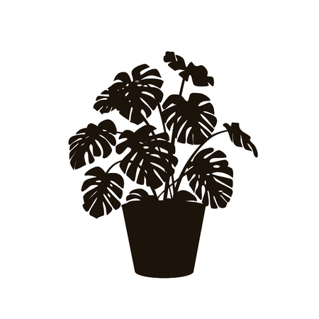 houseplant monstera deliciosa in a pot silhouette