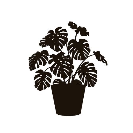 Zimmerpflanze monstera deliciosa in einer Topfsilhouette