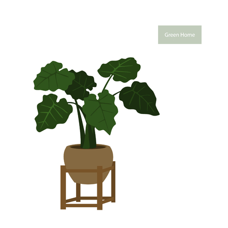 elephant ear foliage plant in a pot in decorative plant stand vector illustration Ilustrace