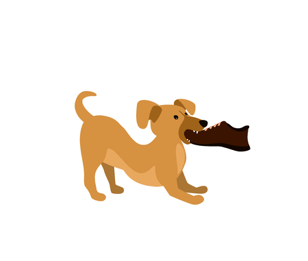 vector illustration of a cute funny dog chewing an owner shoe