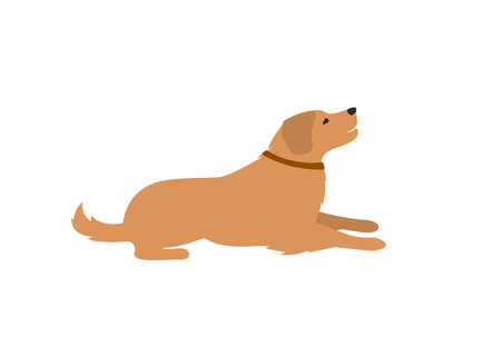 labrador retriver lying down isolated vector ilustration Illustration