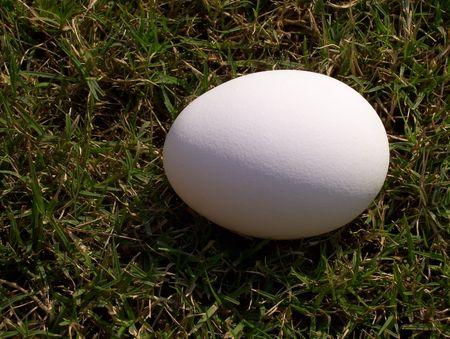 Egg sur herbe verte  Banque d'images - 3236399
