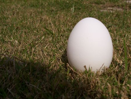 Egg on green grass Stock Photo