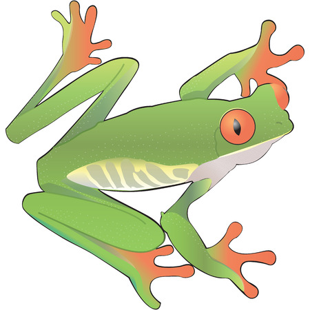 Green frog vector art