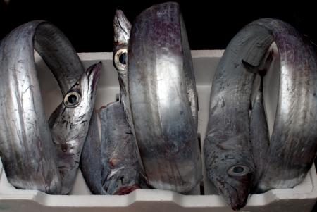 scheide: drei Scheide-Fische auf dem Markt