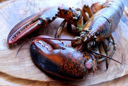 Ready to cook a lobster Stock Photo - 16418941