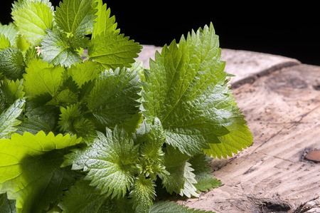 a bunch of fresh nettles, used in alternative medicine Banque d'images