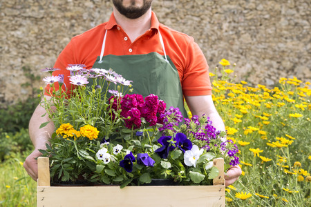 floriculture: a young florist with a composition of spring flowers to be planted