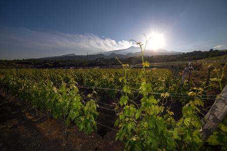 シチリア島のエトナ山の領土内のブドウ園不動産