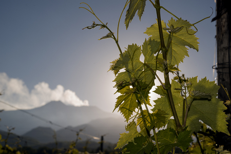 Weingut in Sizilien auf dem Territorium des Ätna Standard-Bild - 47228487
