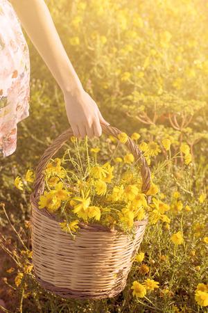 yellow wildflowers: basket of freshly picked yellow wildflowers